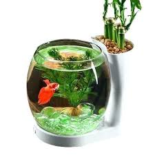 Decorative Fish Bowls Fish Bowl Decoration Gottaketchup 80