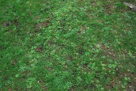 grass at night texture. Unique Texture Grass Texture By AledJonesDigitalArt  Throughout At Night Texture F