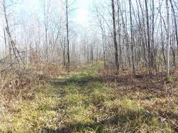 285 acre hunting parcel build sites in chippe