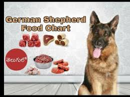 German Shepherd Puppy Food Chart German Shepherd Diet And Food Chart In Telugu Taju Logics