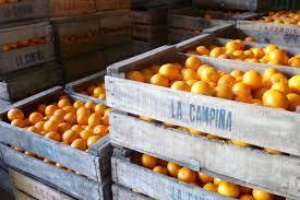 oranges in crates