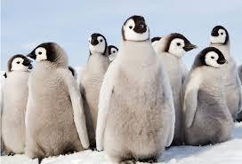 cute penguins. Modren Penguins For Cute Penguins People