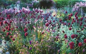 garden planting. planting scheme with allium, origanum and phlox by john glover garden