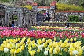 biltmore house tulips