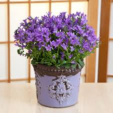 Indoor House Pot Plants U0026 Gifts Online Delivery In Sydney CBDChristmas Gift Plants