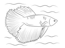 Free Fish Coloring Pages Dcp4 Halfmoon Betta Coloring Page Free