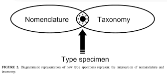 What Is The Difference Between Nomenclature And Taxonomy
