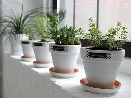 kitchen window herb garden modern white minimalist easy windowsill herb garden planters