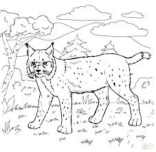 Jungle Coloring Pages Free Printable Google Search Jungle Coloring ...