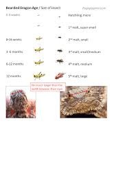 Bearded Dragon Nutrition Chart Bearded Dragon Feeding Chart Facebook Lay Chart