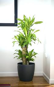 house plants safe for cats indoor plants for potted house plants house plants