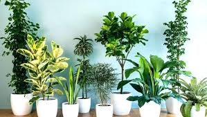 modern office plants. Mini Indoor Plants Small Plant Modern  For Office .