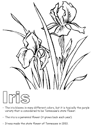 Small Picture Tennessee State Flower Iris coloring page Teaching Units