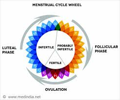 Period Menstrual Cycle Calculator