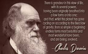 Endless Forms Most Beautiful Quote Best of Charles Darwin Quotes