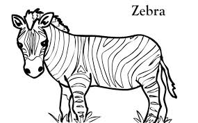 Small Picture cute preschool coloring pages zebra born chestatee wildlife
