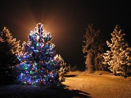 tree design appealing outdoor lighted trees
