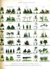 Tree Identification Chart Vintage Tree Identification Chart Tree Identification