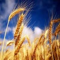 Сельское хозяйство Узбекистана