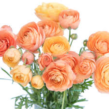 Image result for blush ranunculus