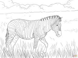 Baby Zebra Coloring Pages
