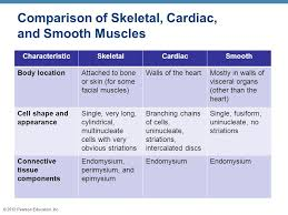 The Muscular System Three Basic Muscle Types Are Found In