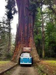photo credit chandelier tree redwood coast cc