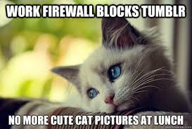 Work firewall blocks tumblr no more cute cat pictures at lunch ... via Relatably.com