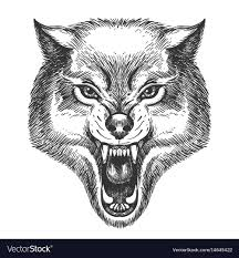 Drawn Wolf Hand Drawn Wolf Head Royalty Free Vector Image