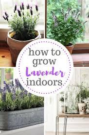 Indoor Garden Best 10 Indoor Gardening Ideas On Pinterest Water Plants
