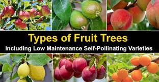 types of fruit trees with pictures