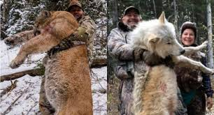 Wolf Picture Sparks Angry Comments, From Both Hunters and Anti-Hunters
