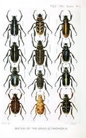 274 Best Natuur Images On Pinterest Animals Wild Animals And