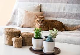 cat on sofa next to house plants on coffee table