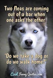 Two Fleas Are Coming Out Of A Bar When One Asks The Other Do We
