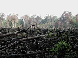 deforestation and soil erosion in the caribbean enciclopediapr deforestation and soil erosion in the caribbean