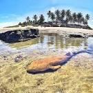 imagem de Baía da Traição Paraíba n-10