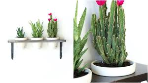 indoor wall planters indoor wall planters amazon hanging wall planters  indoor australia indoor wall planters canada