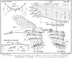 鳥の羽根 構造 Google 検索 Pegasus2019 翼白い鳥鳥