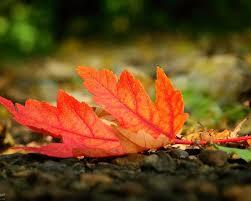 Картинки по запросу осень картинки природа