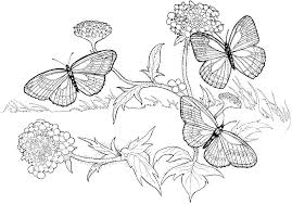 Small Picture KidscolouringpagesorgPrint Download fall coloring pages for