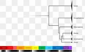 Deeeep Io Evolution Phylogenetic Tree Life Diagram Png