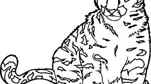 Warrior Cats Coloring Pages Printable Online To Print Big Cat Free