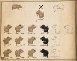 What Are Dominant And Recessive
