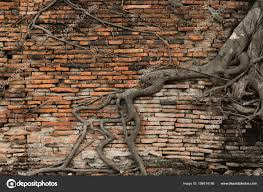 old brick wall forest root tree ancient temple background stock photo