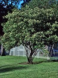 Cool Tree House Designs BEST HOUSE DESIGN  Good Tree House DesignsGood Trees For Backyard