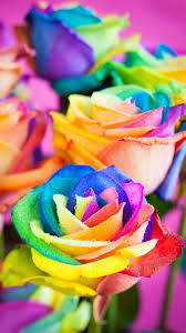 Colorful Flowers Wallpaper For Iphone ...