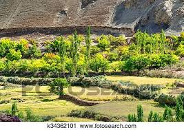 Top view of green valley field with barren mountains around, agricultural  land, Leh, Ladakh, India Stock Image | k34362101 | Fotosearch