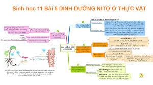 Sinh học 11 Bài 5 DINH DƯỠNG NITƠ Ở THỰC VẬT - Địa chỉ cung cấp các thông  tin về học tập hữu ích nhất - Blogradio - Kênh tin tức tổng