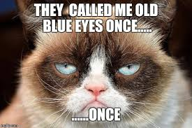 grumpy cat not amused Meme Generator - Imgflip via Relatably.com